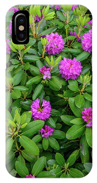 Blue Ridge Mountains Rhododendron Blooming IPhone Case