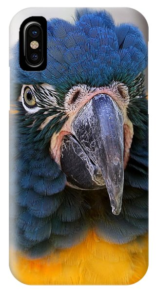 Blue-throated Macaw Close-up IPhone Case