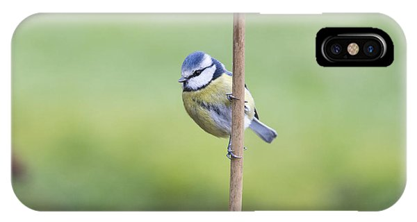 Titmouse iPhone Case - Blue Tit On A Garden Cane by Tim Gainey