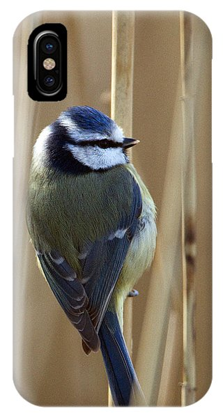 Blue Tit On Reed IPhone Case