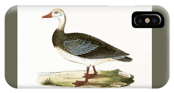 Blue Winged Goose IPhone Case