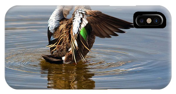 Blue Winged Teal 4 IPhone Case