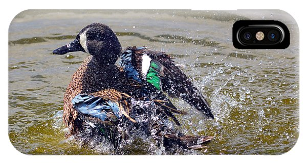 Blue Winged Teal 5 IPhone Case