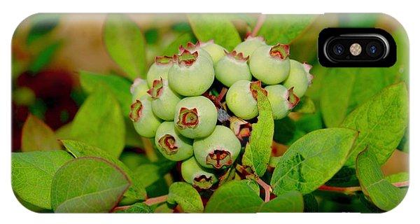 iPhone Case - Blueberries by Megan Cohen