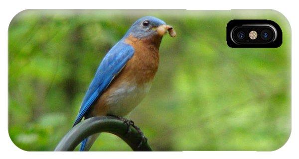 Bluebird Catches Worm IPhone Case