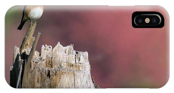 Bluebird Fall Perch IPhone Case