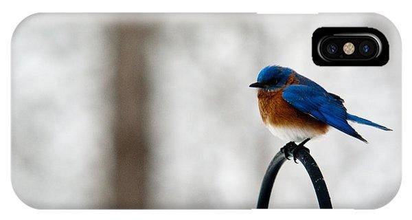 Crossville iPhone X Case - Bluebird Fluffed by Douglas Barnett