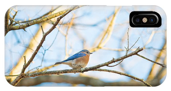 Bluebird In Tree IPhone Case