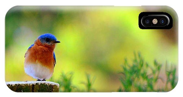 IPhone Case featuring the photograph Bluebird by Lisa Wooten