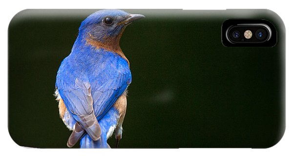 IPhone Case featuring the photograph Bluebird Male by Angel Cher