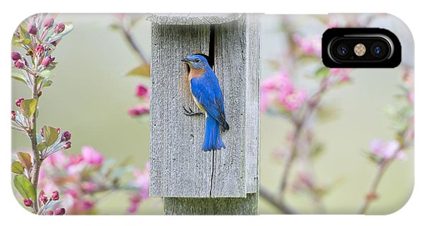 Bluebird Nesting Box IPhone Case