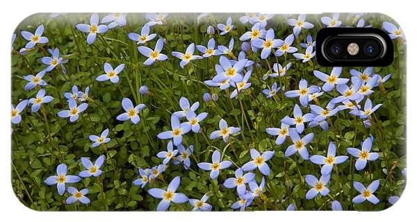 Bluets IPhone Case