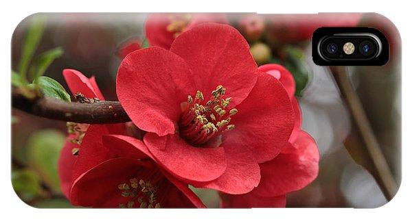 Blushing Blooms IPhone Case
