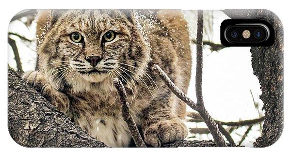 Bobcat In Winter IPhone Case