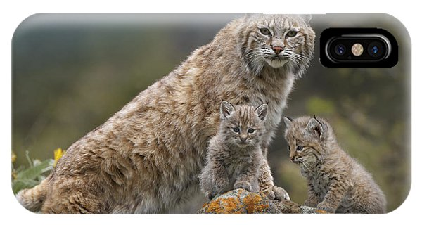 Bobcats iPhone Case - Bobcat Mother And Kittens North America by Tim Fitzharris