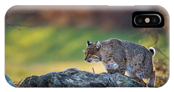 Bobcat On The Hunt Square IPhone Case