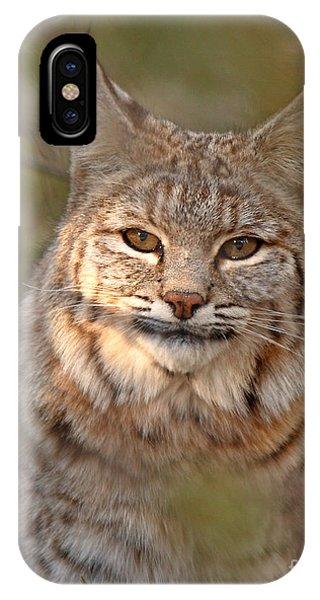 Bobcat Portrait Surrounded By Pine IPhone Case