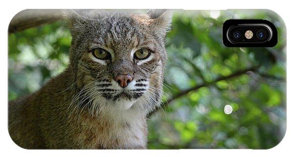 Bobcat Staring Contest IPhone Case