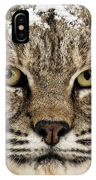 Bobcat Whiskers IPhone Case