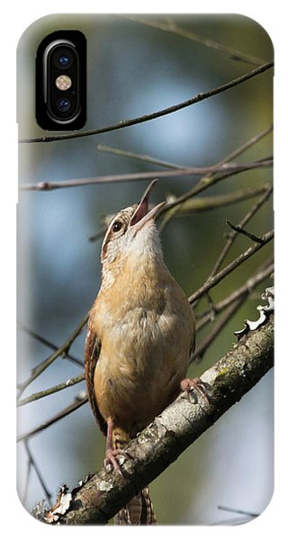 Bobolink Singing IPhone Case