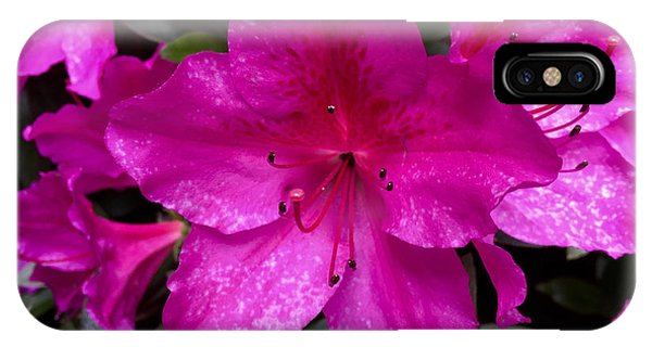 Bold Pink Flower IPhone Case