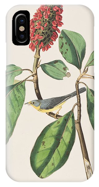 Bonaparte's Flycatcher IPhone Case