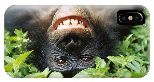 Mp iPhone Case - Bonobo Smiling by Cyril Ruoso