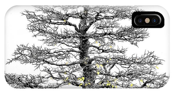 Bonsai Elm Tree - Canberra - Australia IPhone Case