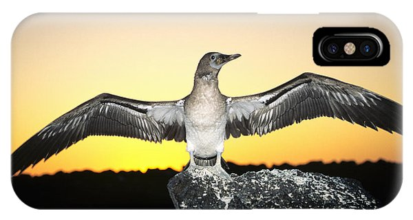 Boobies iPhone Case - Booby At Sunset by Dave Fleetham - Printscapes