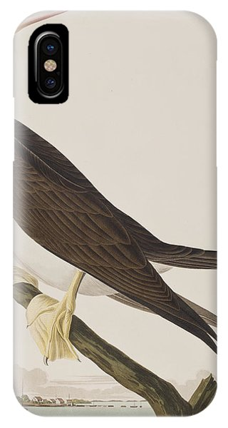Boobies iPhone Case - Booby Gannet   by John James Audubon
