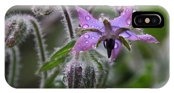 Borage Umbrella IPhone Case