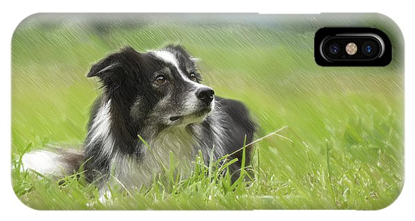 Border Collie - Dwp2189332 IPhone Case