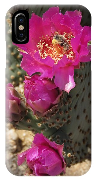 Borrego Springs Bloom 6 IPhone Case