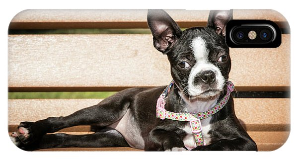 Boston Terrier Puppy Relaxing IPhone Case