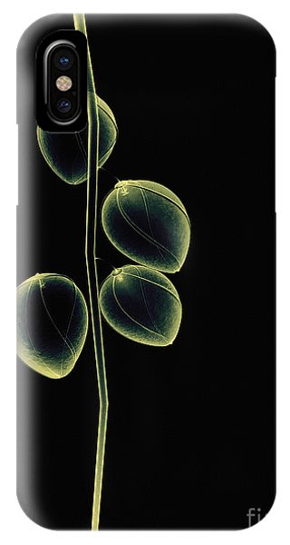 Botanical Study 2 IPhone Case
