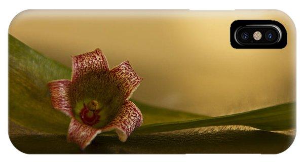 iPhone Case - Bottle Tree Flower by Kelly Holm