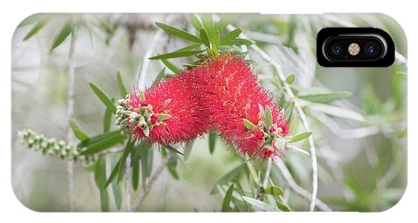 Bottlebrush IPhone Case