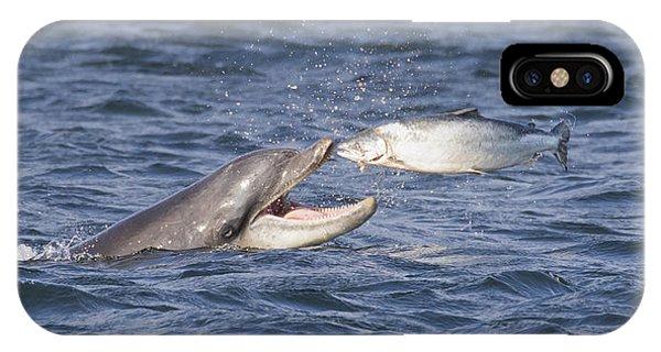 Bottlenose Dolphin Eating Salmon - Scotland  #36 IPhone Case