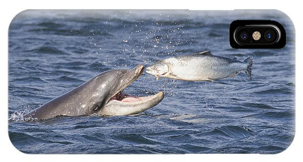 Bottlenose Dolphin Eating Salmon - Scotland  #36 IPhone Case