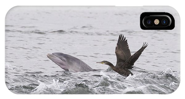 Baby Bottlenose Dolphin - Scotland #10 IPhone Case