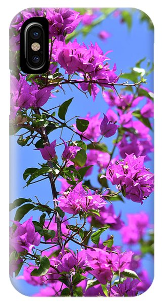 Bougainvillea And Sky IPhone Case