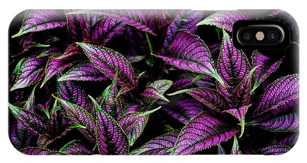 Bouquet Of Persian Shield IPhone Case