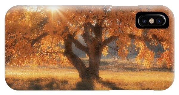Boxelder's Autumn Tree IPhone Case