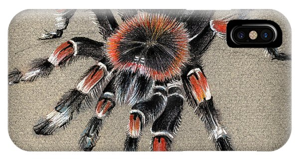 Brachypelma Smithi  Mexican Red Knee Tarantula IPhone Case
