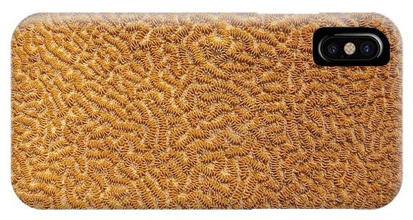 Brain Coral 47 IPhone Case