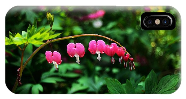 Branch Of Bleeding Heart Blooms IPhone Case