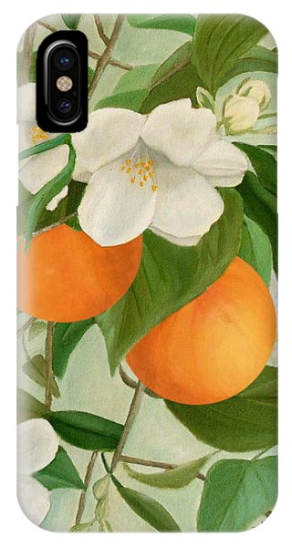 IPhone Case featuring the painting Branch Of Orange Tree In Bloom by Angeles M Pomata