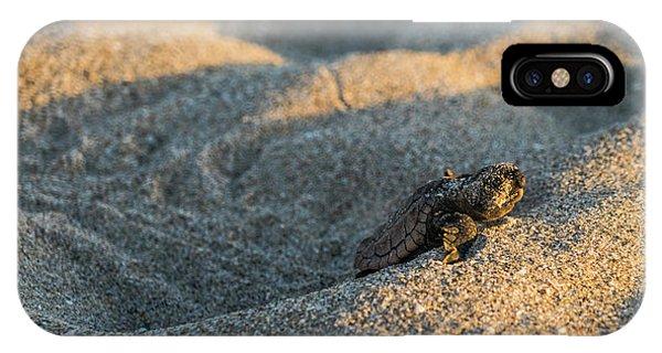 Brave Beginnings Sea Turtle Hatchling Delray Beach Florida IPhone Case