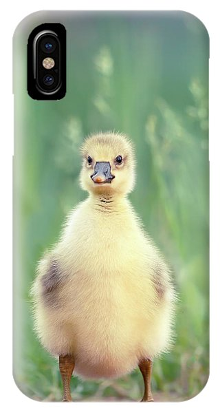 Gosling iPhone Case - Brave New Baby - Gosling Ready To Conquer The World by Roeselien Raimond