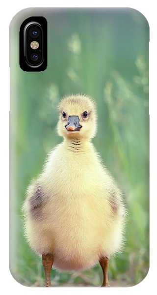 Goslings iPhone Case - Brave New Baby - Gosling Ready To Conquer The World by Roeselien Raimond